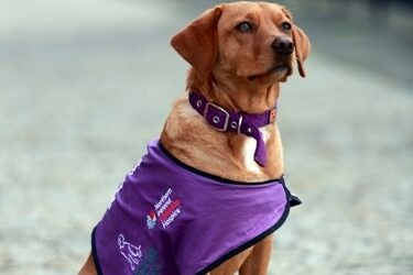 Baker Tilly Mooney Moore Sponsors NI Hospice Therapy Dog